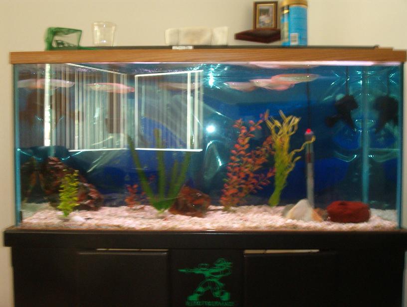 Fish tank 80 gallon 80 gallon marine fish tank aquarium for 20 gallon fish tank for sale